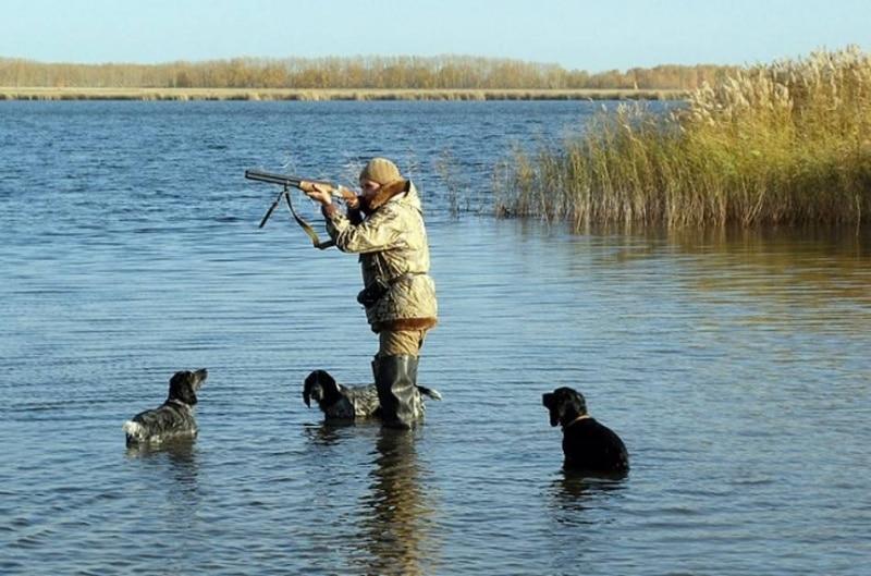 охота на водоплавающую дичь