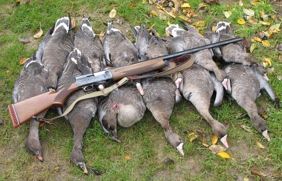 Добрым, смешные картинки охота на гуся