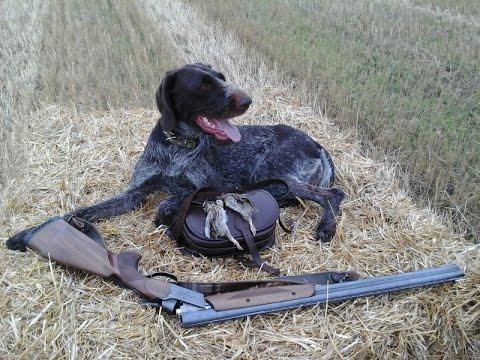 Охота с легавыми собаками