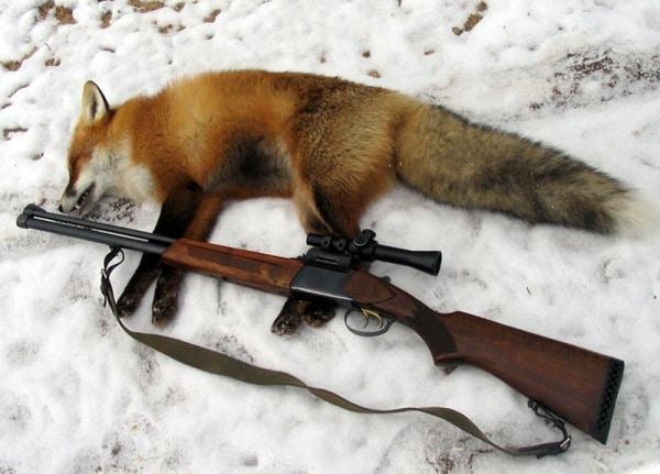 Охота на лису зимой