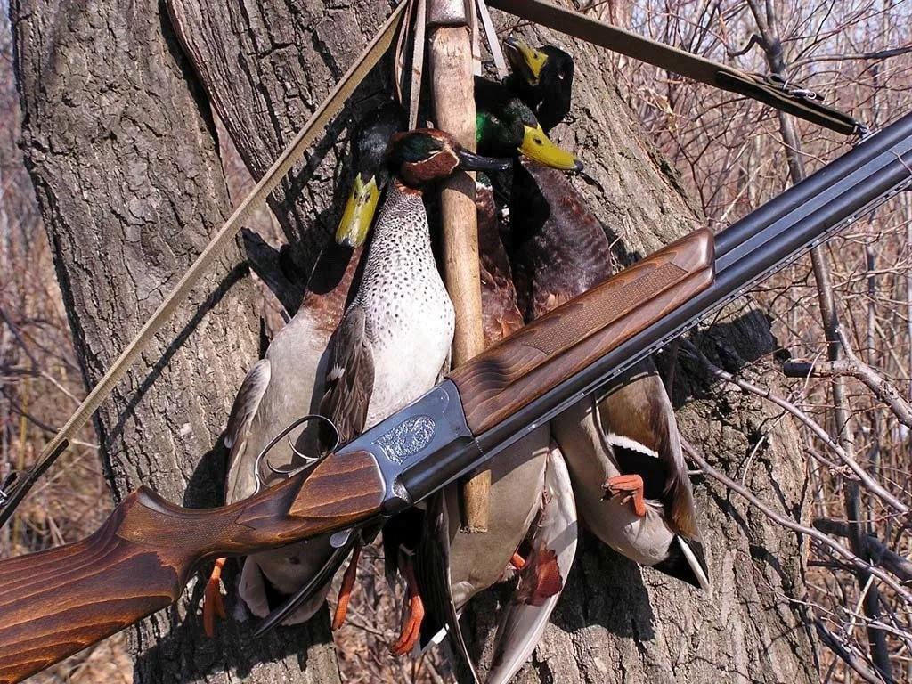 Охота на селезня утки весной
