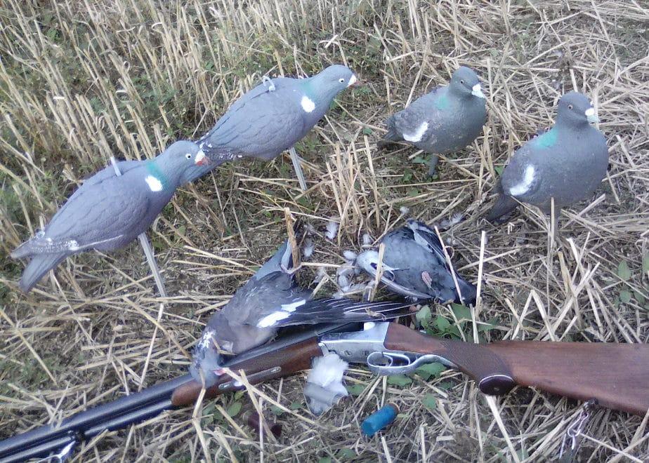 вяхирь - охота с чучелами