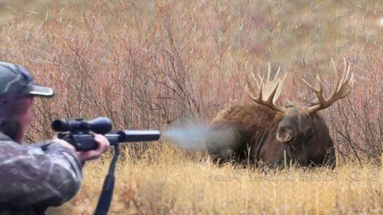 стрельба по лосю