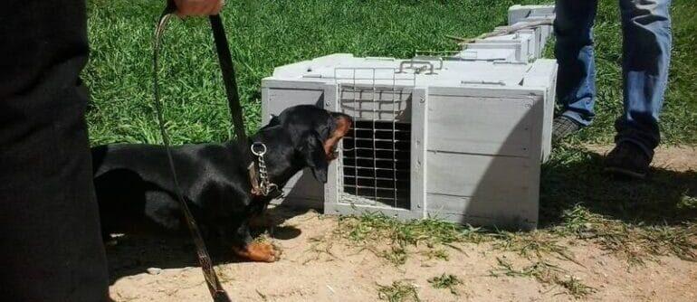 притравка собак