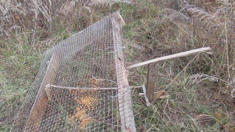 сеть на фазана